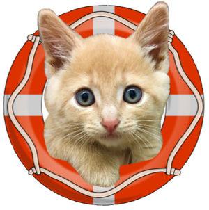 lifesaver1