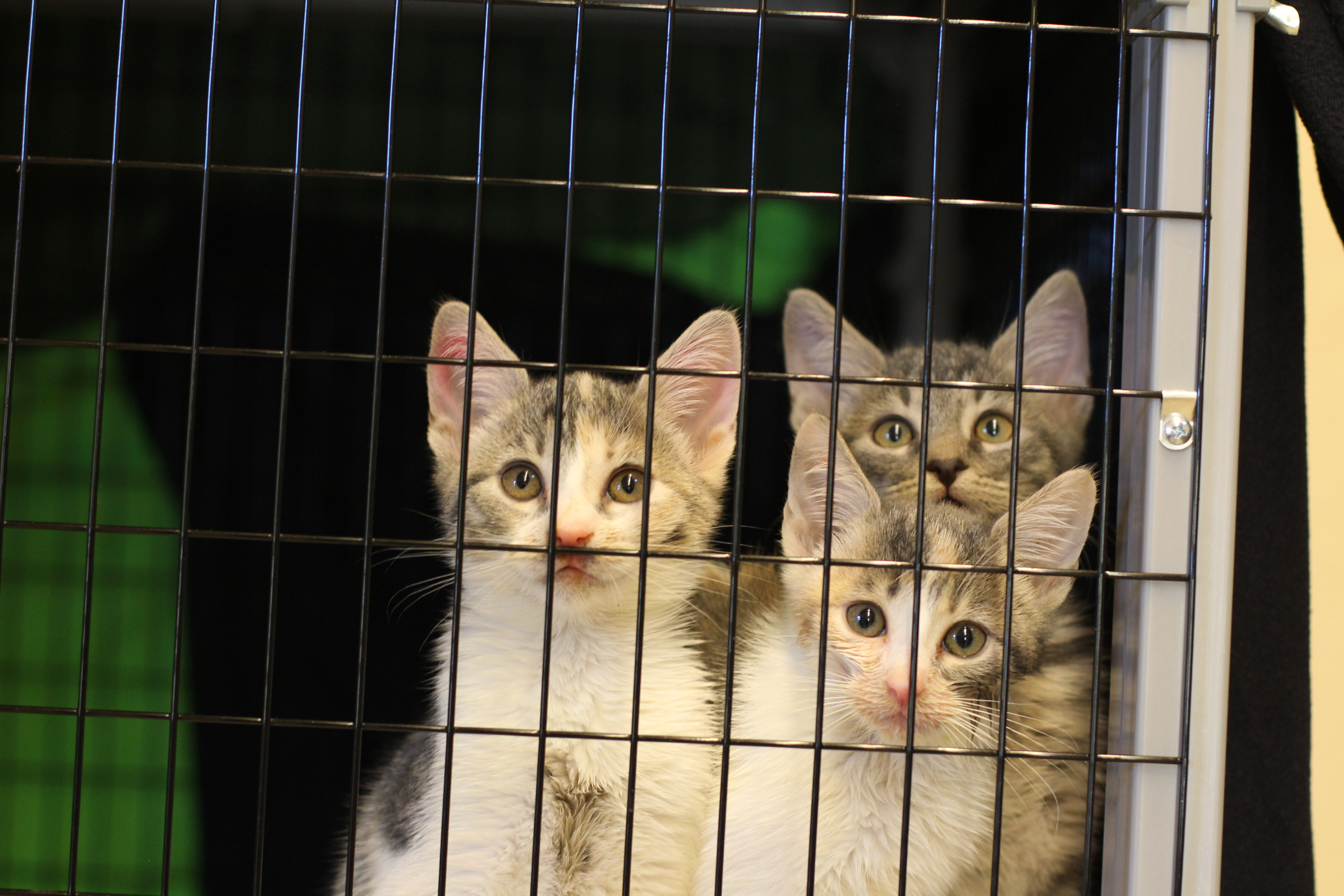 One-Time Donations - Rogue Valley Humane Society