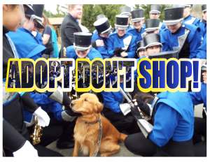 adopt dont shop fb cover